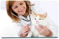 Veterinarians are project go grow greatly with more people buying pets